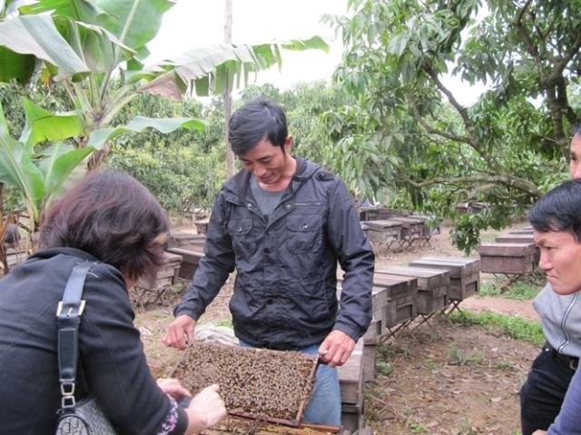 Tiềm năng ngành ong VN còn rất lớn