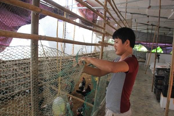 Trại gà Quý Phi