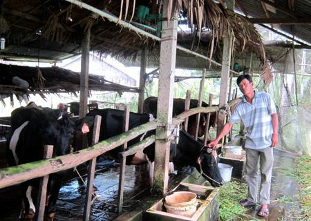 Anh Trần Văn Chiến bên đàn bò cho thu nhập trên 300 triệu đồng/năm