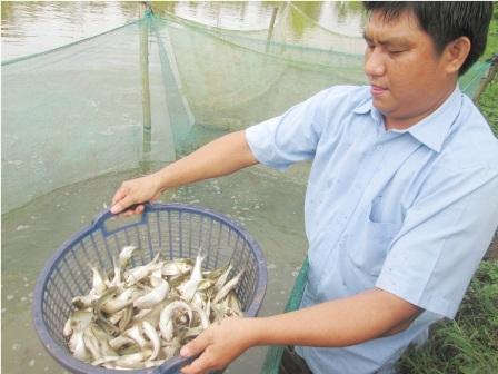 Tận dụng nguồn cá mồi để nuôi rắn, trung bình tiếu tốn khoảng 190.000 - 210.000 đồng, rắn đạt trọng lượng 1kg