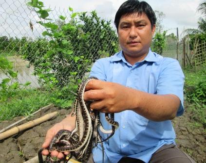 Thất bại  từ nghề nuôi thỏ, năm 2009 anh Bằng quyết định chuyển sang nuôi rắn ri voi trong vèo cước