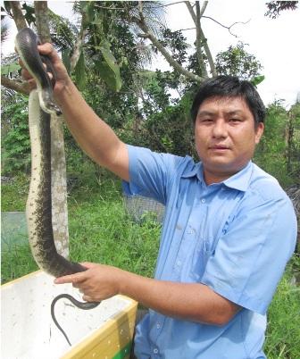 Với giá bán rắn 80.000 đến 100.000 đồng con rắn con và 600.000 đồng kg rắn thịt, mỗi năm anh Bằng có thu nhập khoảng 400 triệu đồng