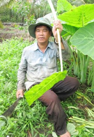 Hiện nay, mỗi tháng ông Dân thu hoạch từ 3,5 -4 tấn bạc hà
