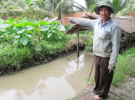 Tận dụng ao trong ruộng bạc hà, ông Dân nuôi các loại cá đồng tự nhiên