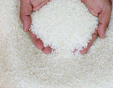 Việt Nam sẽ ưu tiên nghiên cứu các giống lúa có giá bán cao