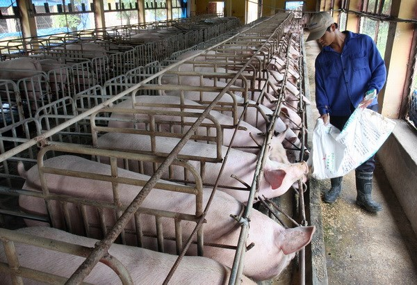 Nhiều doanh nghiệp đã rút ra khỏi ngành chăn nuôi