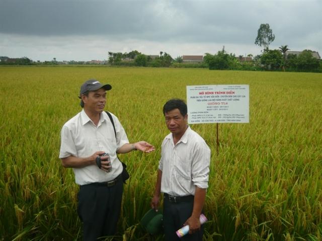 Phân bón Văn Điển phát huy tại vùng đất nhiễm mặn chua phèn Kim Sơn, Ninh Bình