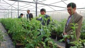 Ngày càng nhiều đại gia Việt Nam đầu tư vào nông nghiệp công nghệ cao.