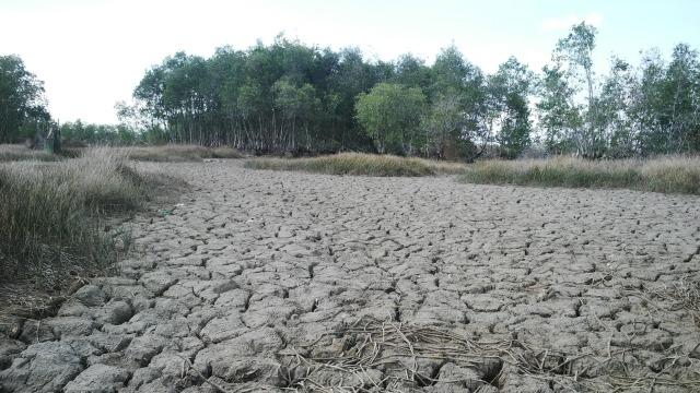 Hạn hán đến sớm đã gây thiệt hại nặng cho tỉnh Cà Mau.