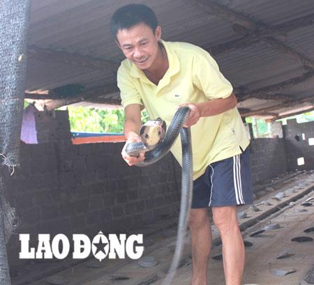 Ông Đồng Văn Phong - người nuôi rắn nhiều nhất thôn - hào hứng chia sẻ về nghề.