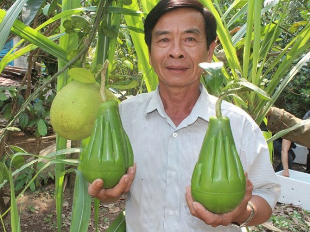 Ông Nguyễn Trung Thành và sản phẩm bưởi bàn tay Phật