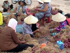 Lao động làng nghề hành tím dễ dẫn đến viêm giác mạc.