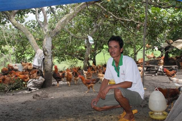 Mô hình nuôi gà thịt của anh Tâm cho hiệu quả cao.