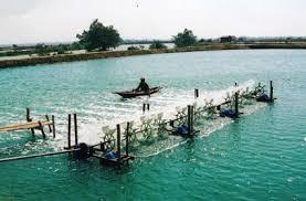 Hồ nuôi tôm